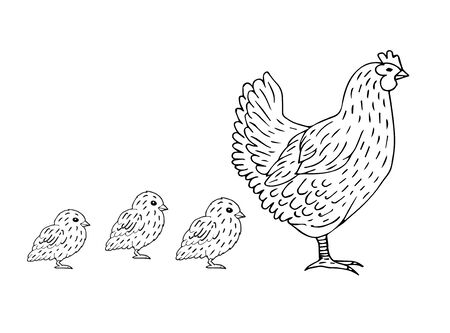 Vector hand drawn doodle sketch chicken and baby chicks isolated on white background Ilustração