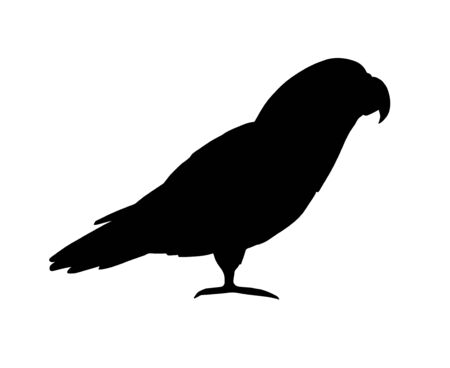 Vector black gray African parrot silhouette isolated on white background