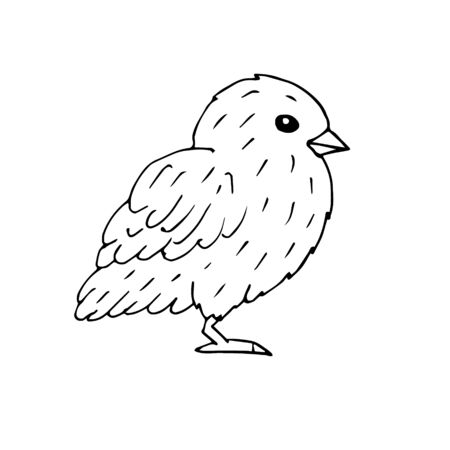 Vector hand drawn doodle sketch baby chick isolated on white background Фото со стока - 137886605