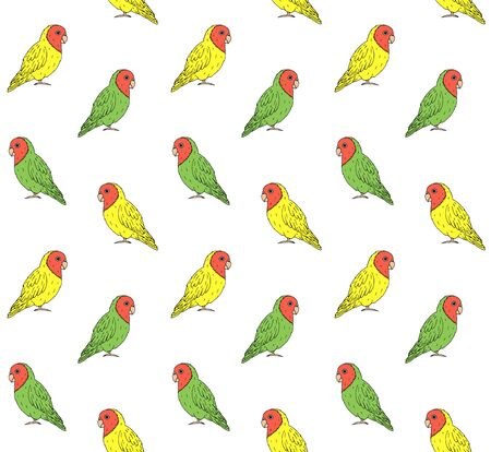Vector seamless pattern of hand drawn doodle sketch colored lovebirds parrots isolated on white background Ilustração