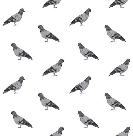 Vector seamless pattern of hand drawn doodle sketch pigeon isolated on white background
