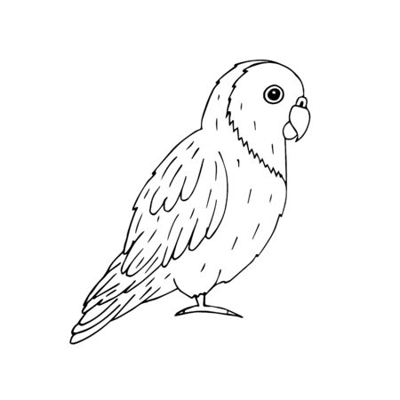 Vector hand drawn doodle sketch outline lovebird parrot isolated on white background