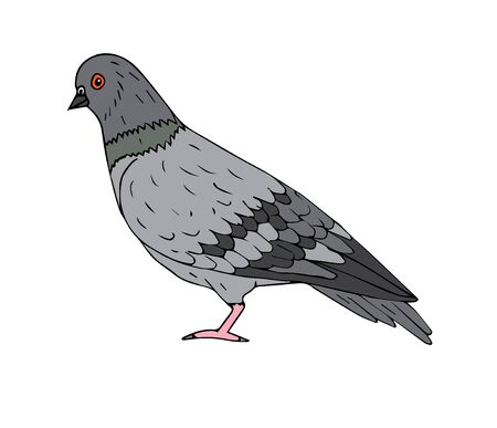 Vector hand drawn doodle sketch pigeon isolated on white background