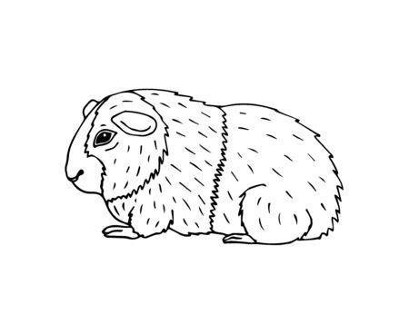 Vektor handgezeichnete Doodle Skizze Meerschweinchen isoliert auf weißem Hintergrund Vektorgrafik