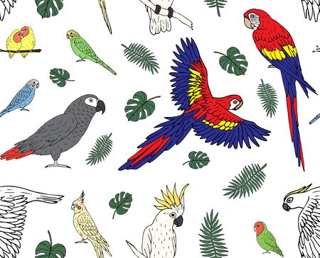 Vector seamless pattern of hand drawn doodle sketch colored parrots isolated on white background Иллюстрация