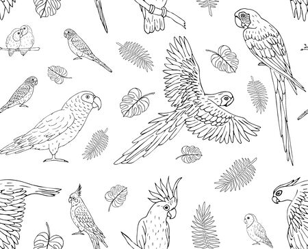 Vector seamless pattern of hand drawn doodle sketch parrots isolated on white background