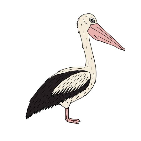 Vector hand drawn doodle sketch colored pelican isolated on white background