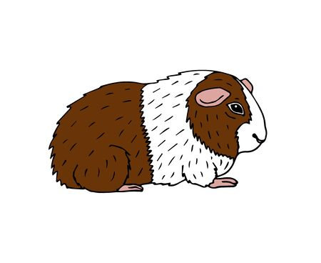Vector hand drawn colored doodle sketch Guinea pig isolated on white background