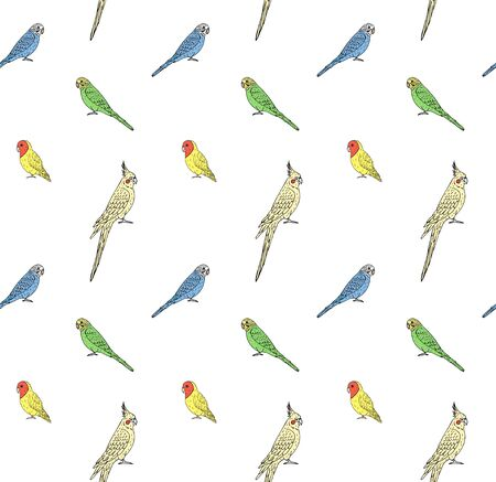 Vector seamless pattern of hand drawn doodle sketch different colored parrots isolated on white background Иллюстрация