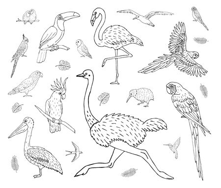 Vector set bundle of hand drawn doodle sketch tropical wild birds isolated on white background