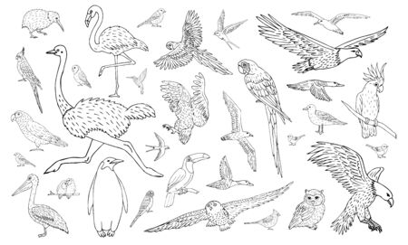 Vector set bundle of different hand drawn doodle sketch wild birds isolated on white background Иллюстрация