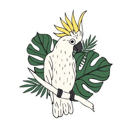 Vector hand drawn doodle sketch colored cockatoo parrot with palm leaves illustration isolated on white background