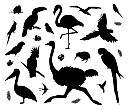 Vector set bundle of black tropical wild birds silhouette isolated on white background Иллюстрация