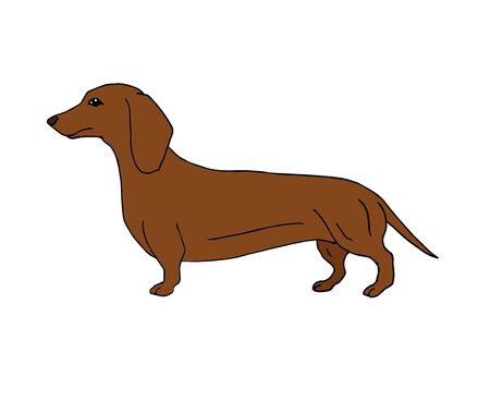 Vector hand drawn doodle sketch brown dachshund dog isolated on white background