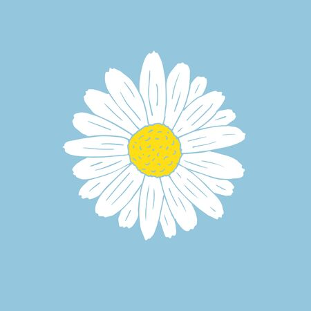 Vector hand drawn doodle sketch daisy chamomile flower isolated on blue background