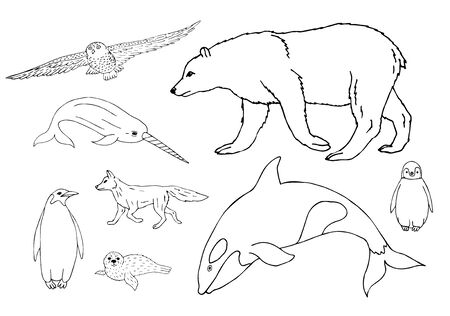 set bundle of hand drawn doodle sketch polar north animals isolated on white background