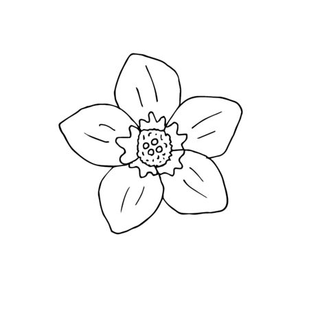 Vector hand drawn doodle sketch forget me not flower isolated on white background