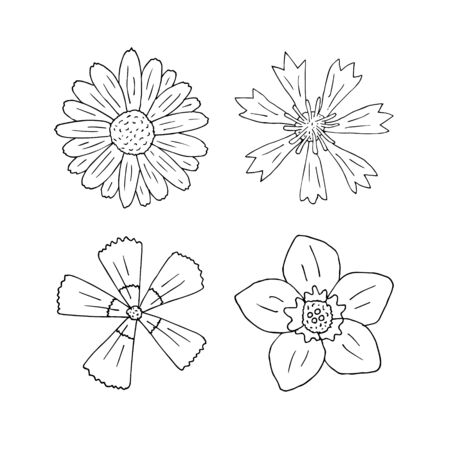 Vector set bundle of hand drawn doodle sketch field flowers isolated on white background