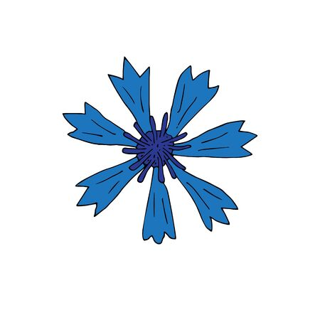 Vector hand drawn doodle sketch blue cornflower isolated on white background