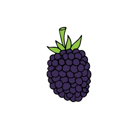 hand drawn doodle sketch colored blackberry isolated on white background 向量圖像