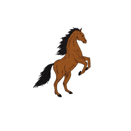 Vector hand drawn doodle sketch brown bay horse isolated on white background