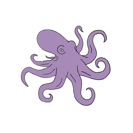 Vector hand drawn doodle sketch violet colored octopus isolated on white background