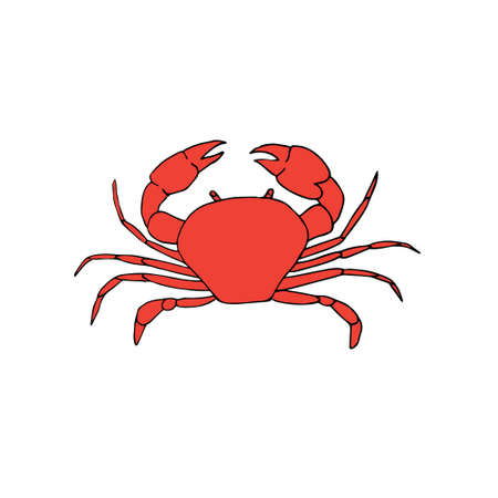 Vector hand drawn doodle sketch colored crab isolated on white background Illustration