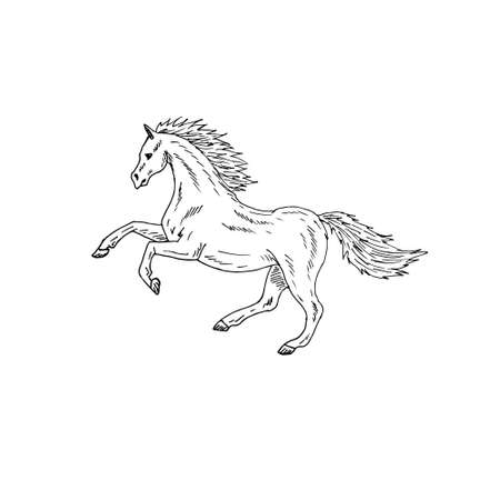 Vector hand drawn doodle sketch horse isolated on white background