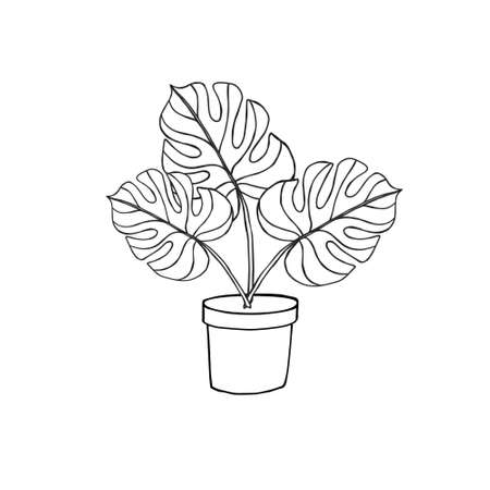 Vector hand drawn doodle sketch monstera in pot isolated on white background 矢量图像