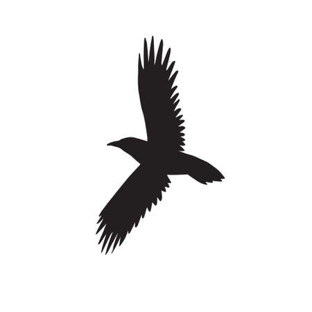 Vector hand drawn flying raven silhouette isolated on white background 矢量图像