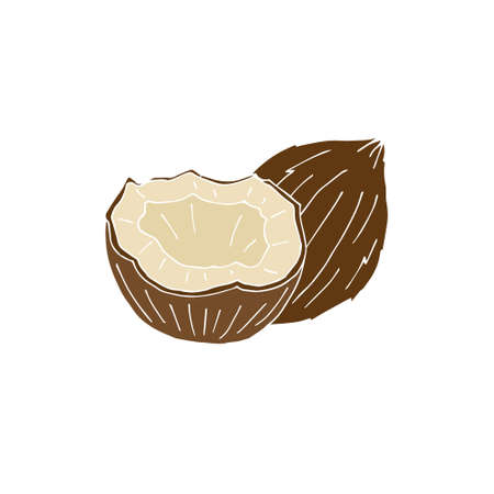 Vector colored hand drawn doodle sketch coconut isolated on white background 矢量图像