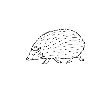 Vector hand drawn doodle sketch hedgehog isolated on white background