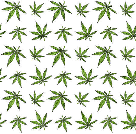 Vector seamless pattern of colored hand drawn doodle sketch marijuana hemp leaves isolated on white background