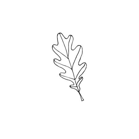 Vector hand drawn doodle sketch oak leaf isolated on white background Иллюстрация