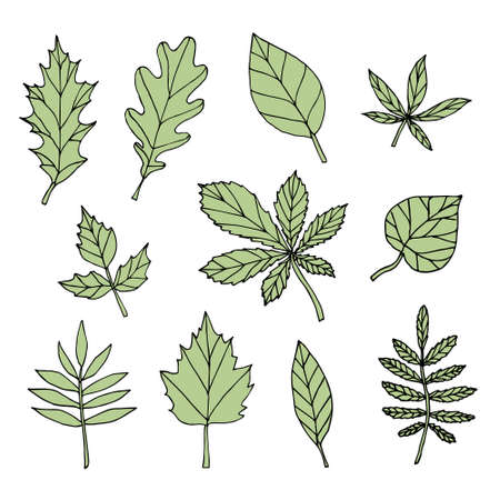 Vector set bundle of green hand drawn doodle sketch leaves isolated on white background