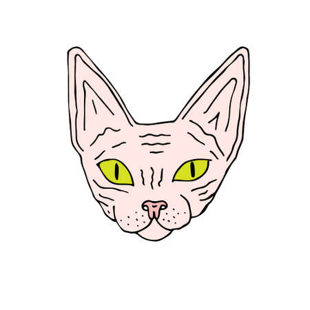 Vector hand drawn doodle sketch colored Sphynx cat face isolated on white background