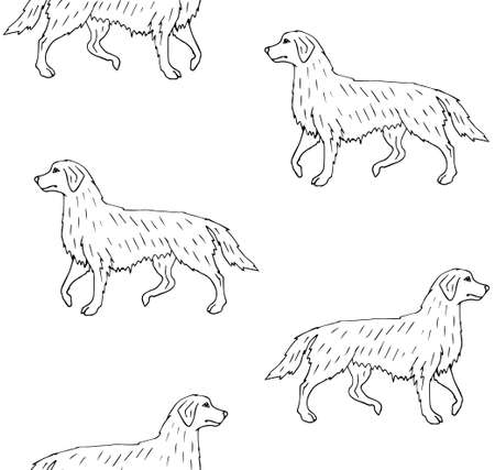 Vector seamless pattern of hand drawn doodle sketch retriever dog isolated on white background 免版税图像 - 164526565