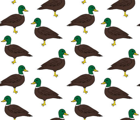 Vector seamless pattern of colored hand drawn doodle sketch duck isolated on white background