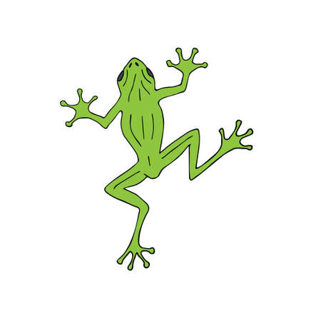 Vector hand drawn doodle sketch colored frog isolated on white background Иллюстрация