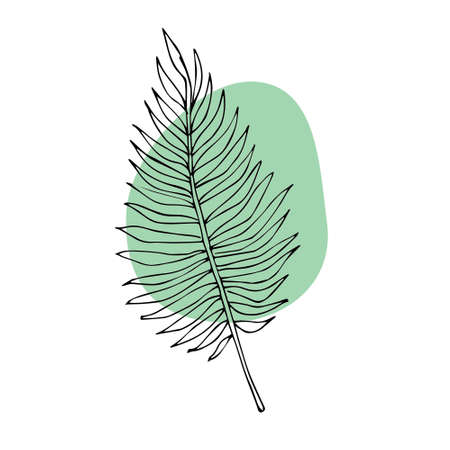 Vector hand drawn doodle sketch palm leaf and abstract stain isolated on white background
