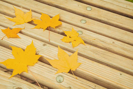 A circle of maple leaves is laid out on a bench. Autumn composition. Flat lay, copy space.
