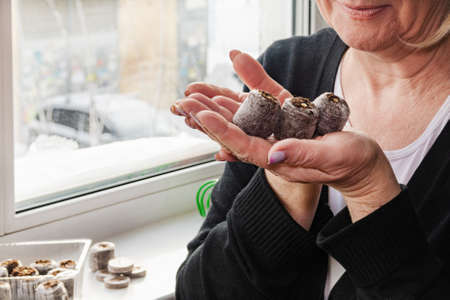A woman looks at peat tablets with seeds on the background of a winter window.