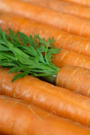 unwashed: Unwashed organic carrots, fresh from the market.