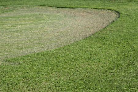 grass verge: Erba ben curato in un golf verde.