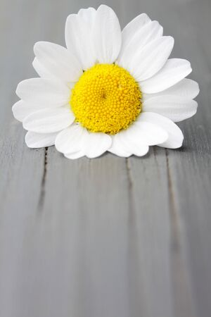 florets: A macro of a common daisy on a fence post. Stock Photo