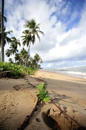 exoticism: Paradise beach Stock Photo