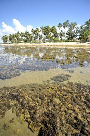 Salvador de Bahia Stock Photo - 3026186