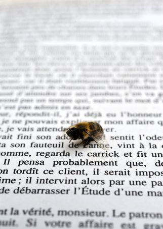 teknik: Bee reading a book Stockfoto