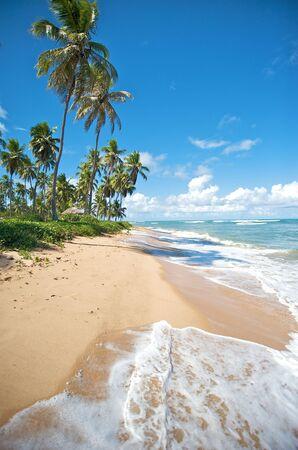 Paradise beach in Praia do Forte, Salvador de Bahia state, Brazil.