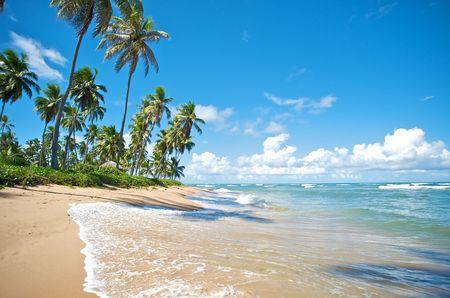 brazil beach: Paradise beach in Praia do Forte, Salvador de Bahia state, Brazil.